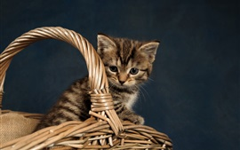 Preview wallpaper Kitten, basket, gray background