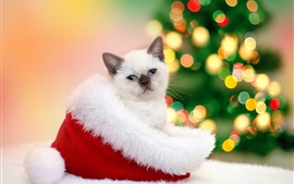 Preview wallpaper Kitten stand in the Christmas hat, colorful light circles