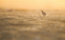 Preview wallpaper Little bird, beach