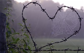 Love heart shaped, metal wire, spider web
