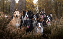 Many dogs, friends, forest