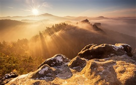 Mountain top, rocks, trees, sunrise, fog