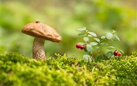 Mushroom, boletus, cranberries, grass