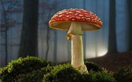 Preview wallpaper Mushroom, moss, forest, plants