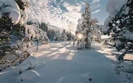 Noruega, inverno, árvores, neve, sombras, nuvens, raios de sol