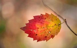 Una hoja, ramitas, otoño