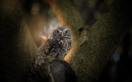 Preview wallpaper Owl, tree, bird photography