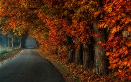 Preview wallpaper Park, trees, fog, road, autumn