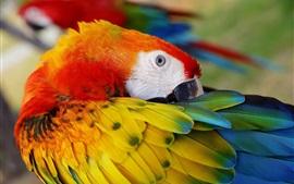 Penas de pano de papagaio