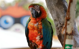 Preview wallpaper Parrot stay here