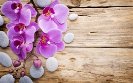 Preview wallpaper Phalaenopsis, purple flowers, stones