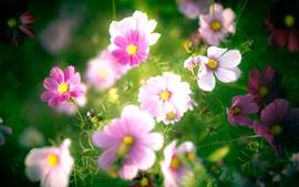 Preview wallpaper Pink flowers, petals, blurry