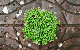 Preview wallpaper Plants, green leaves, top view