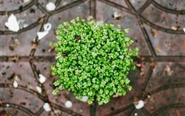 Plantes, feuilles vertes, vue de dessus