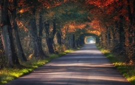 Poland, tunnel, road, trees, autumn