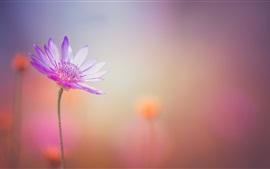 Aperçu fond d'écran Gros plan de fleurs pourpres, pétales, arrière-plan flou