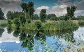 Río, árboles, hierba, verde, paisaje de la naturaleza