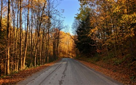 Preview wallpaper Road, trees, autumn, sunshine