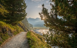 Estrada, árvores, névoa, lago, manhã