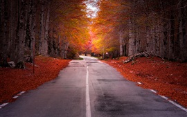 Road, trees, red leaves, autumn, dusk