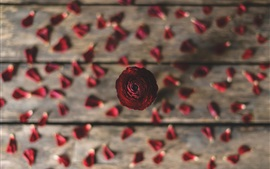 Rose, petals, wood board background
