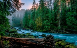 Skykomish, árboles, río, musgo, niebla, EE.UU.