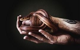 Cobra e mãos