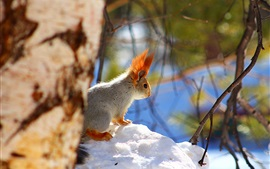 Snow, squirrel, winter, bokeh