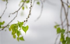 壁紙のプレビュー 春、緑の葉、小枝、ボケ