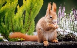 Écureuil, fond de fleurs