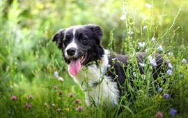 Preview wallpaper Summer, dog, grass, wildflowers