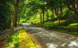 Швейцария, Хильтерфинген, парк, деревья, дорога, зеленый