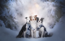 Preview wallpaper Three dogs, scarf, winter, snow