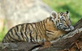 Preview wallpaper Tiger cub, rest, tree, look