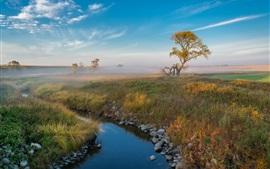 Trees, grass, creek, fog, morning