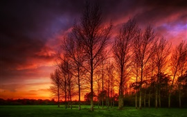 Trees, grass, red clouds, sunset