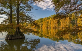 Árboles, lago, otoño