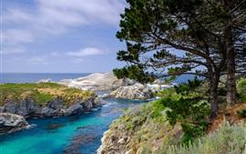 Árboles, rocas, mar