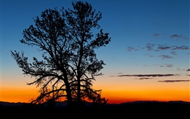 Preview wallpaper Trees, silhouette, night