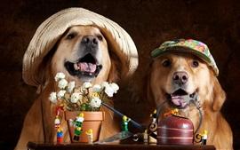 Dos perros, flores, sombrero, animales divertidos