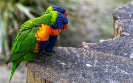 Preview wallpaper Two parrots, stump