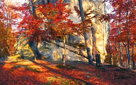 Preview wallpaper Ukraine, stones, trees, red leaves, autumn, sun rays