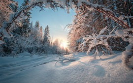 Preview wallpaper Ural, forest, winter, snow, sun rays, Russia