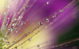 Preview wallpaper Water drops, grass