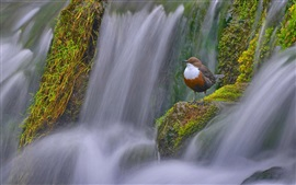 Preview wallpaper Waterfall, sparrow, Derbyshire, England