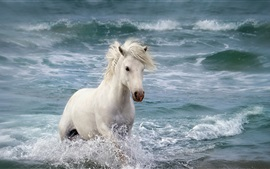 Preview wallpaper White horse in the sea, waves