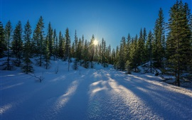 Preview wallpaper Winter, snow, trees, sun rays, blue sky