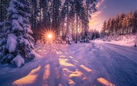 Winter, snow, trees, sun rays, glare