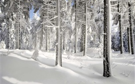 Winter, snow, trees, sun