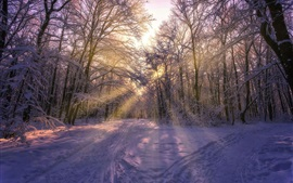 Winter, trees, thick snow, sun rays